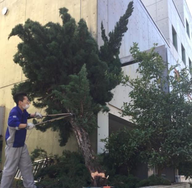 植木の伐採前の写真