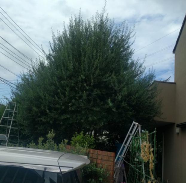 植木の剪定前の写真