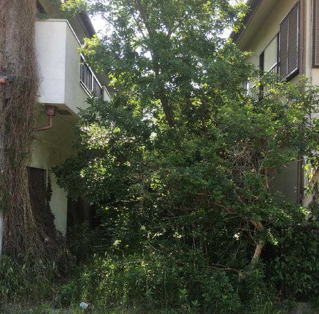 植木・庭木の剪定  草刈り前の写真