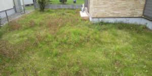 草むしり&芝刈り